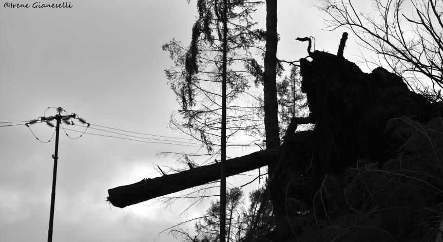 Perché così cattivi con gli alberi? Quello che raccontano del mondo i boschi feriti delTrentino